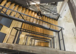 The new Tire Discounters HQ features a six-story floating staircase.