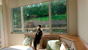 SHP's Michael Sullivan's cat surveys progress in his backyard